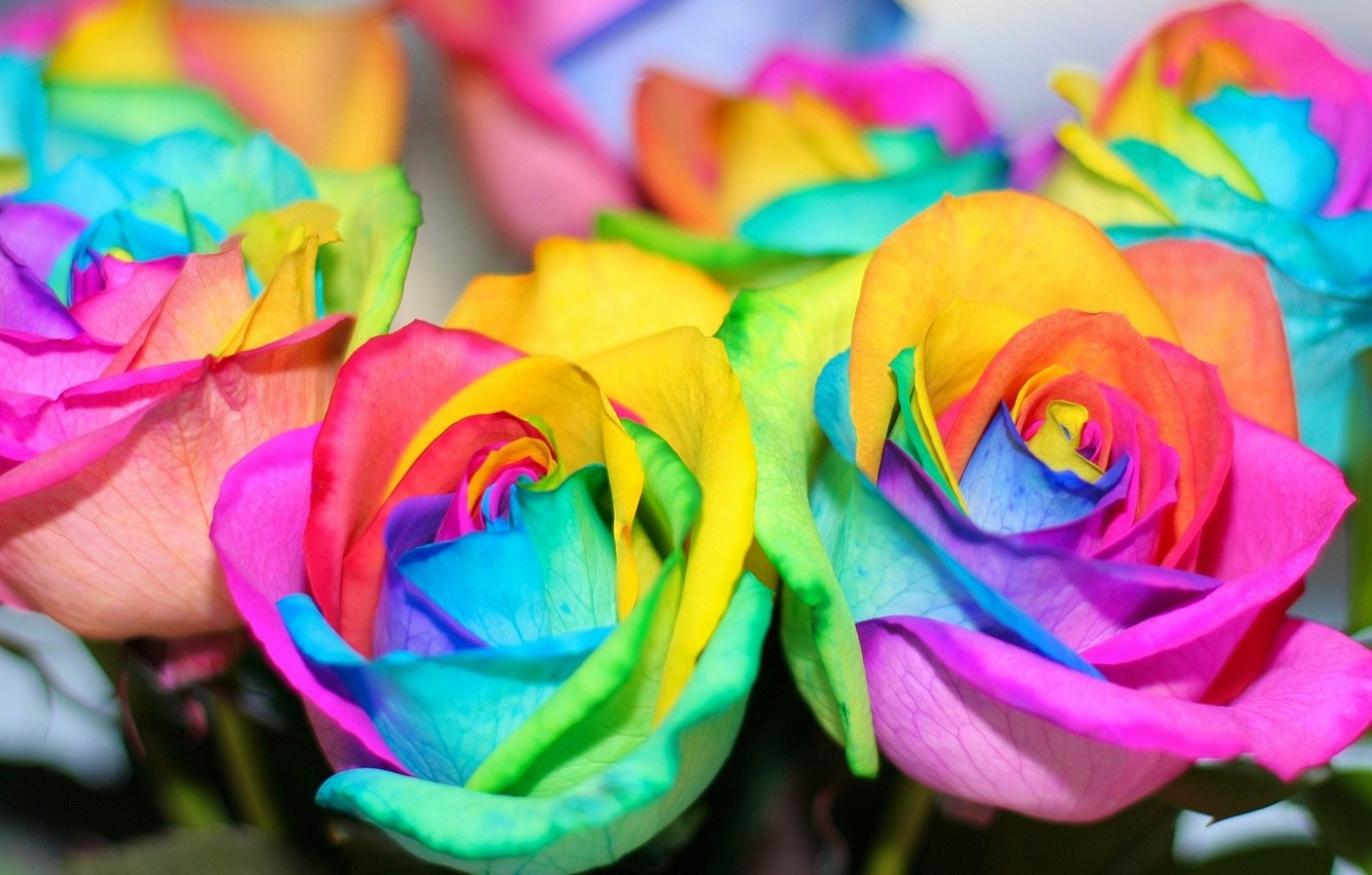 Photo wallpaper flowers, roses, rainbow, colorful, rainbow, colorful, flowers, roses