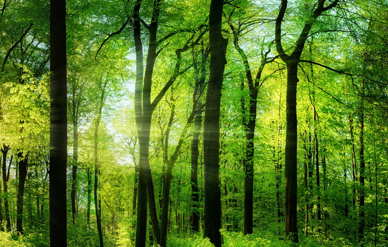Photo wallpaper greens, forest, summer, trees, the rays of the sun