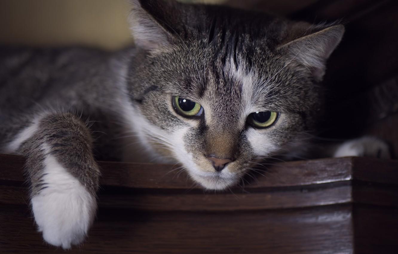 Photo wallpaper eyes, cat, look, Koshak, foot