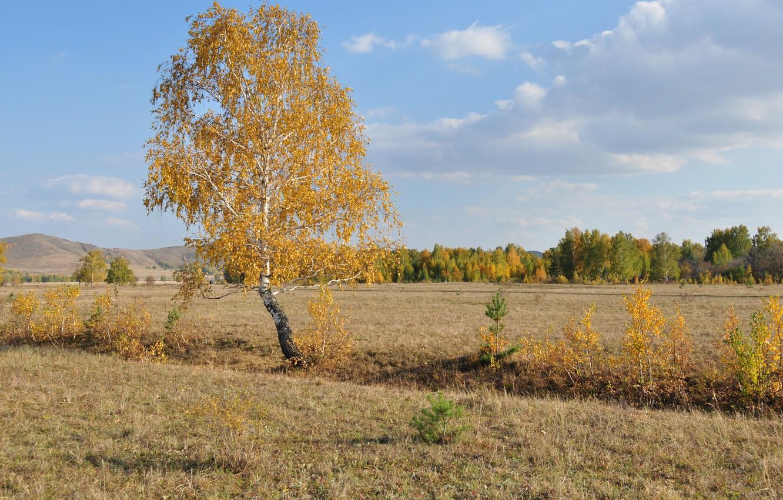 Photo wallpaper field, autumn, the sky, grass, birch
