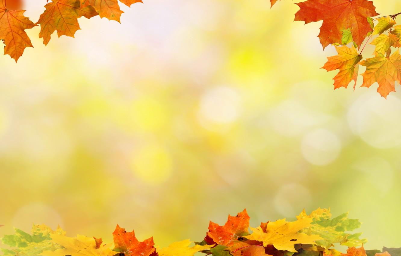 Photo wallpaper Autumn, Leaves, Board, maple, Template, Seasons