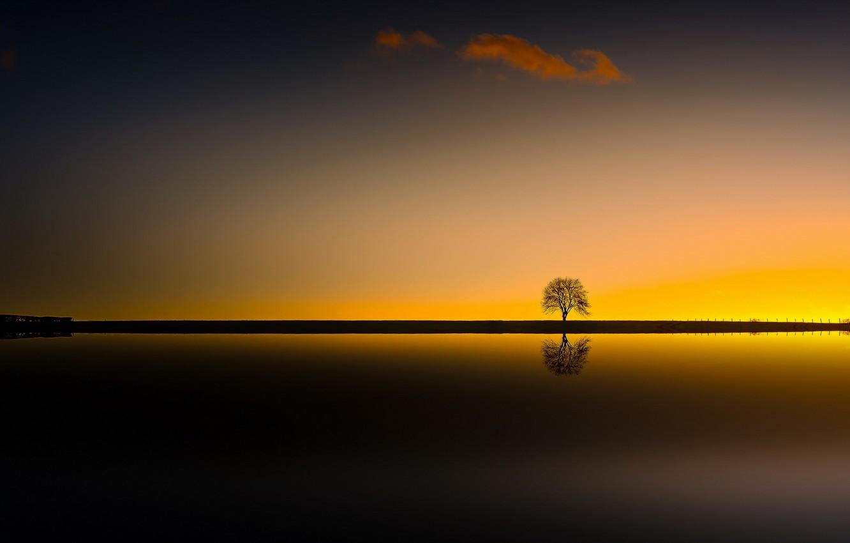 Photo wallpaper night, tree, silhouette