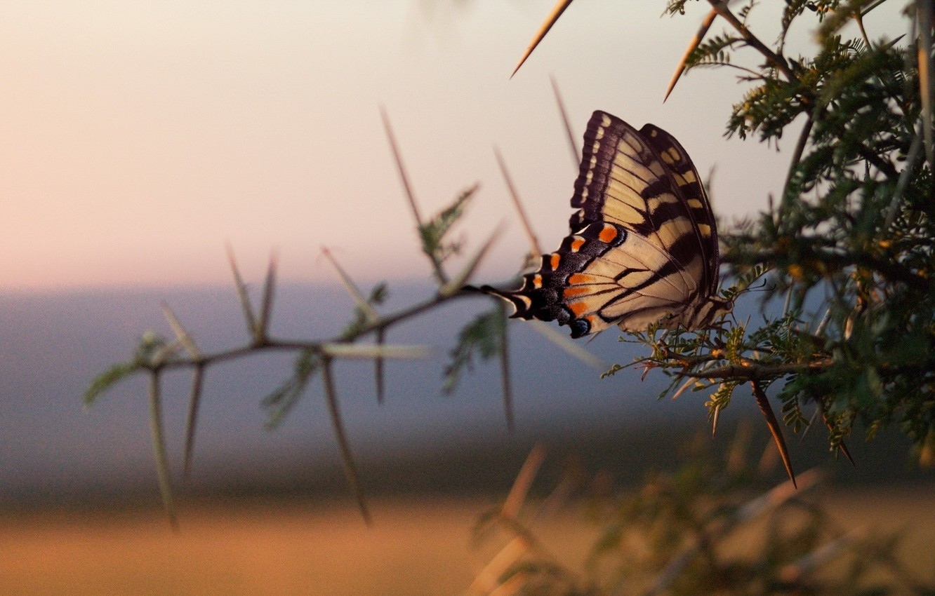 Photo wallpaper branches, Butterfly