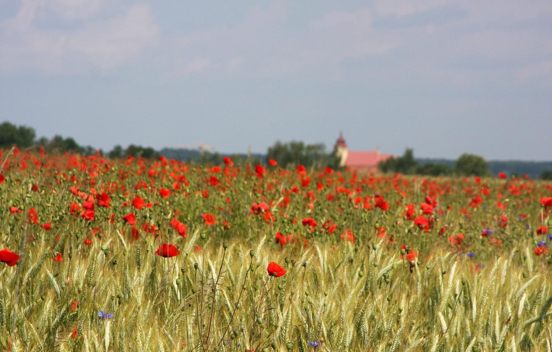 Photo wallpaper field, the sky, flowers, house, Maki, field of flowers, farm, red flowers