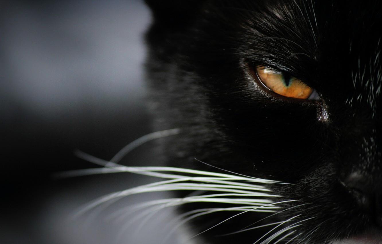 Photo wallpaper eyes, look, Koshak, Tomcat