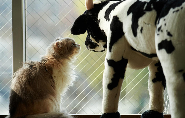 Photo wallpaper cat, cat, toy, cow, window