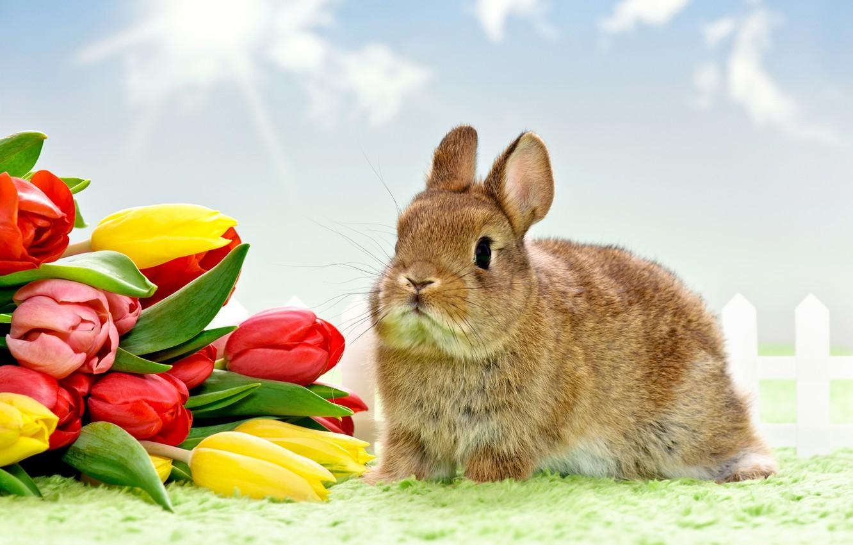 Photo wallpaper flowers, eggs, Easter, tulips
