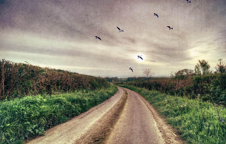 Photo wallpaper road, landscape, birds, style, background, texture
