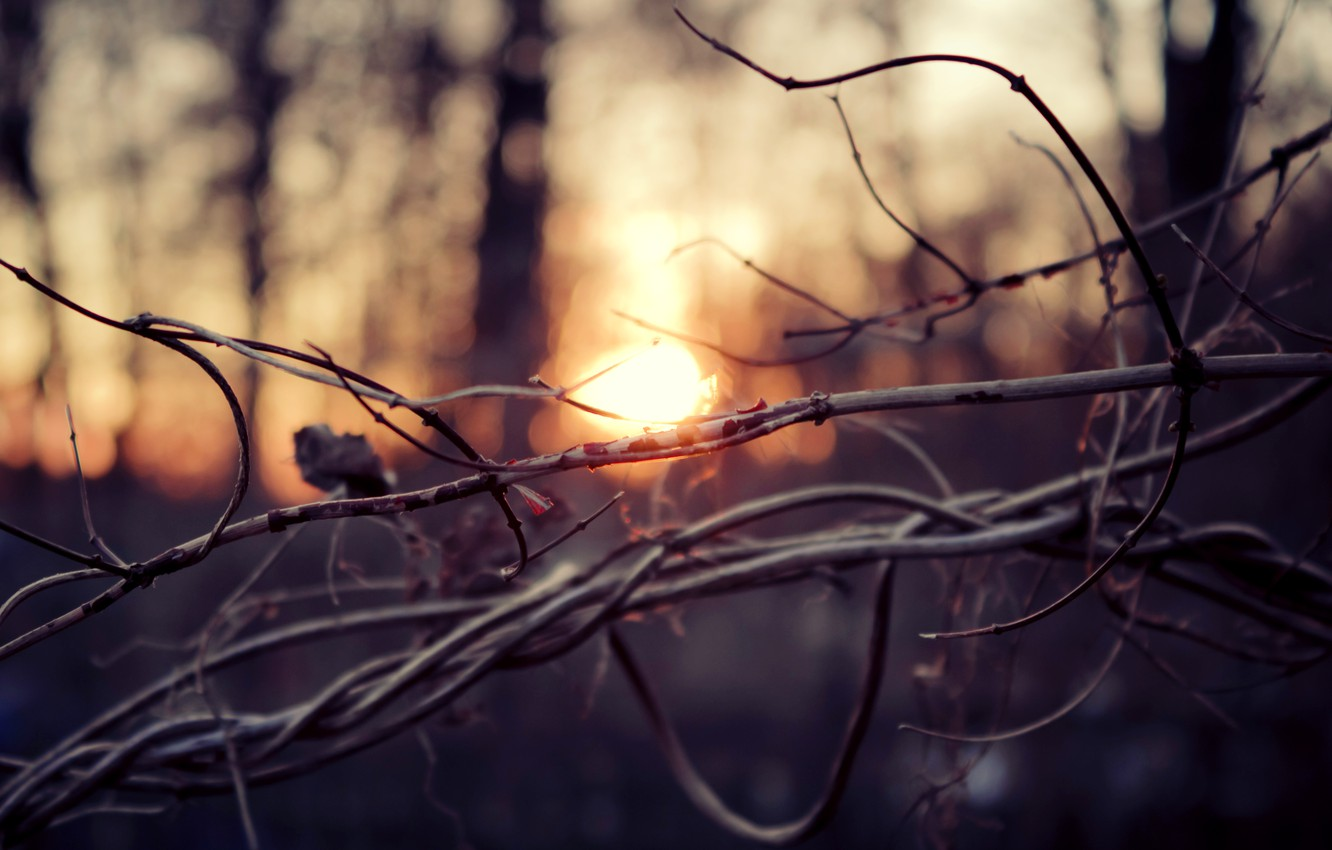 Photo wallpaper autumn, forest, the sun, macro, trees, sunset, branches, branch