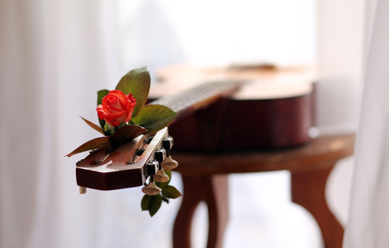 Photo wallpaper love, music, rose, guitar, melody