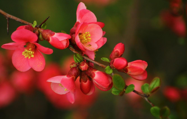 Photo wallpaper branch, Spring, flowering, flowers, bokeh, bokeh, spring, flowering