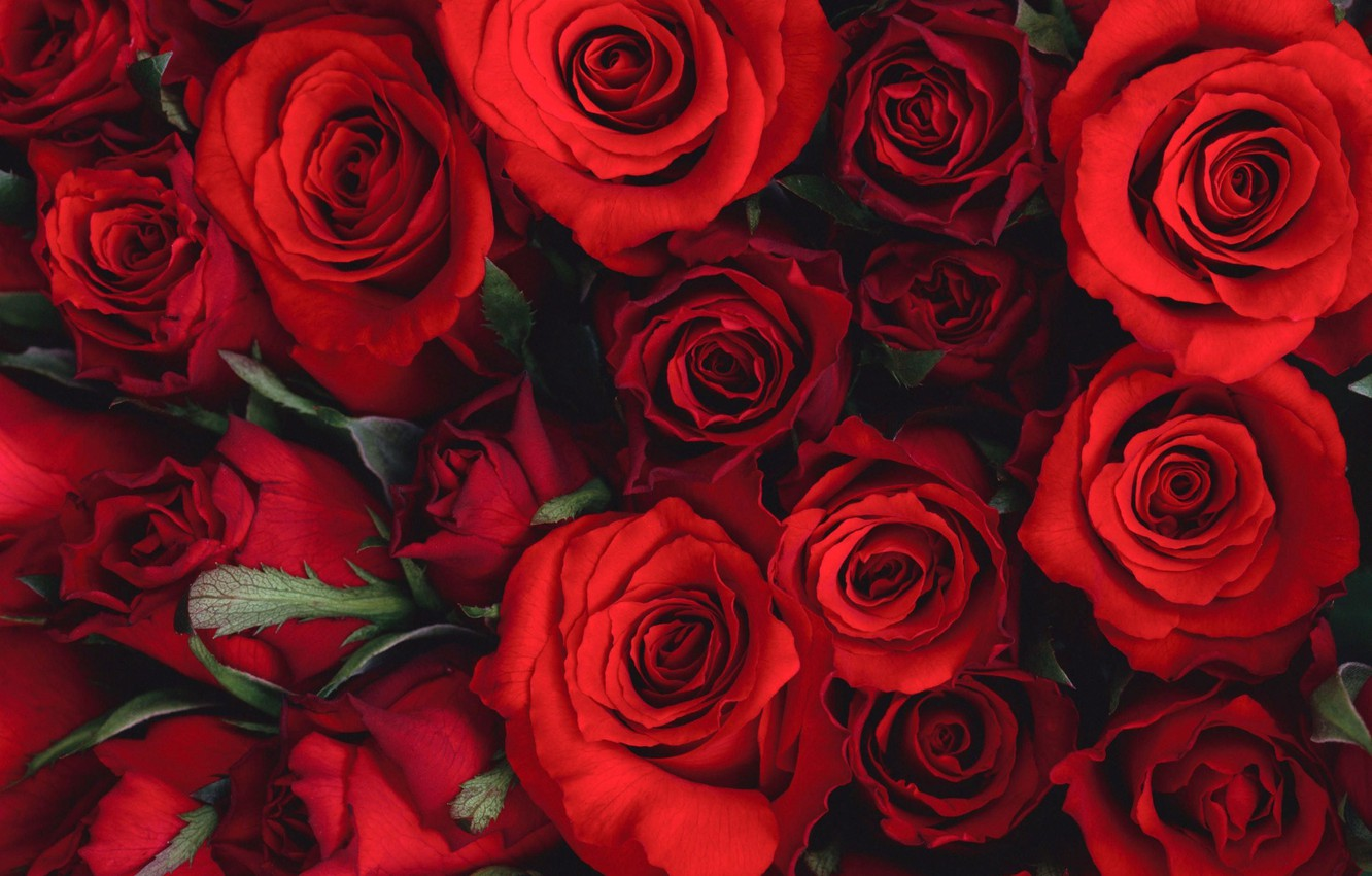 Photo wallpaper flowers, bouquet, beautiful, red, red, Roses, flower, flowers, beautiful, Roses