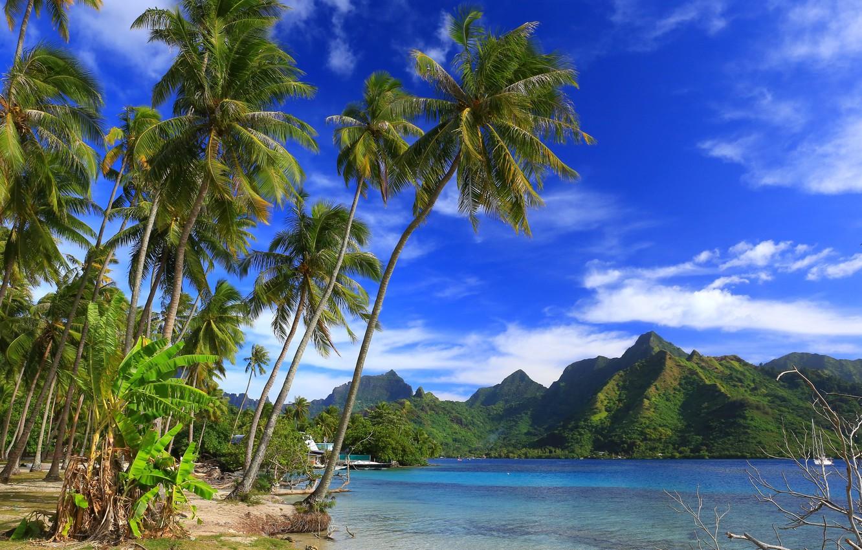 Wallpaper Mountains Tropics Palm Trees The Ocean Coast