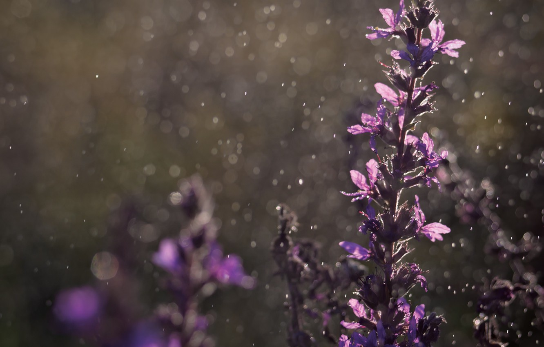 Photo wallpaper drops, flowers, rain, bokeh