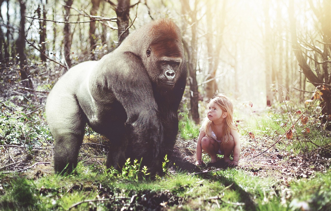 Photo wallpaper forest, the situation, monkey, gorilla, girl