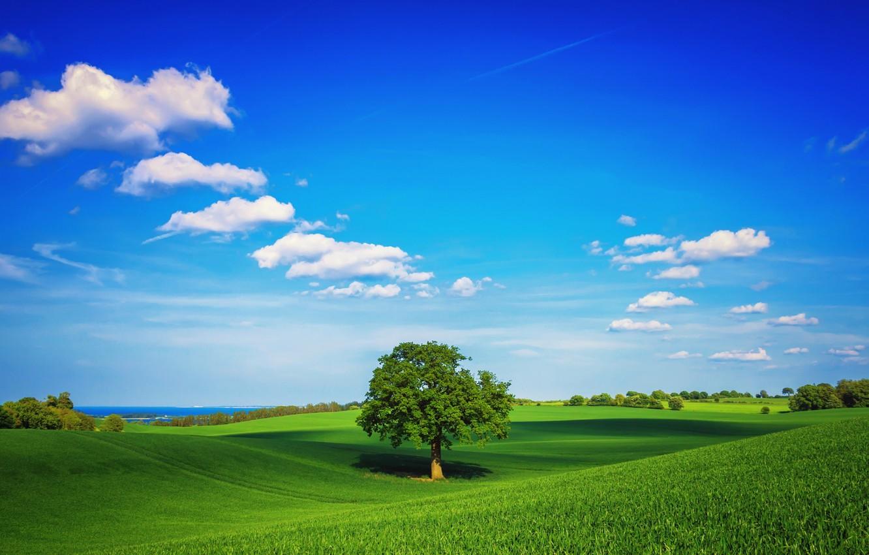 Photo wallpaper nature, park, tree