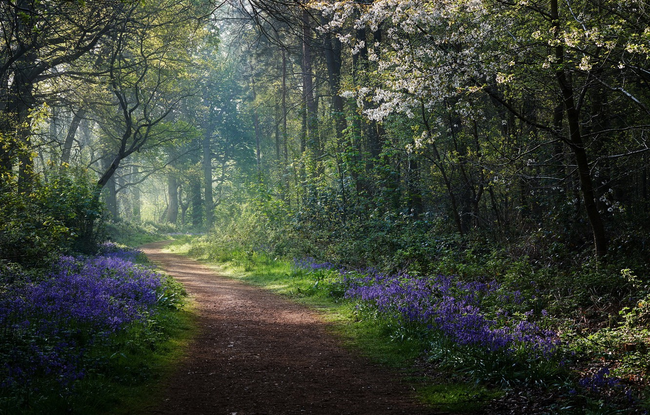 Photo wallpaper road, forest, spring, morning