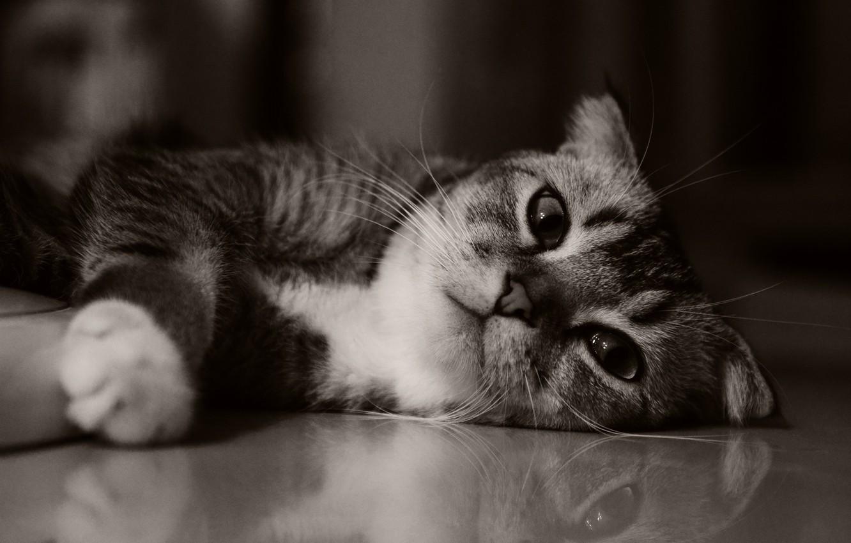 Photo wallpaper cat, kitty, cute, kitten, cat, kitty, cute