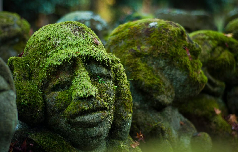Photo wallpaper background, moss, head