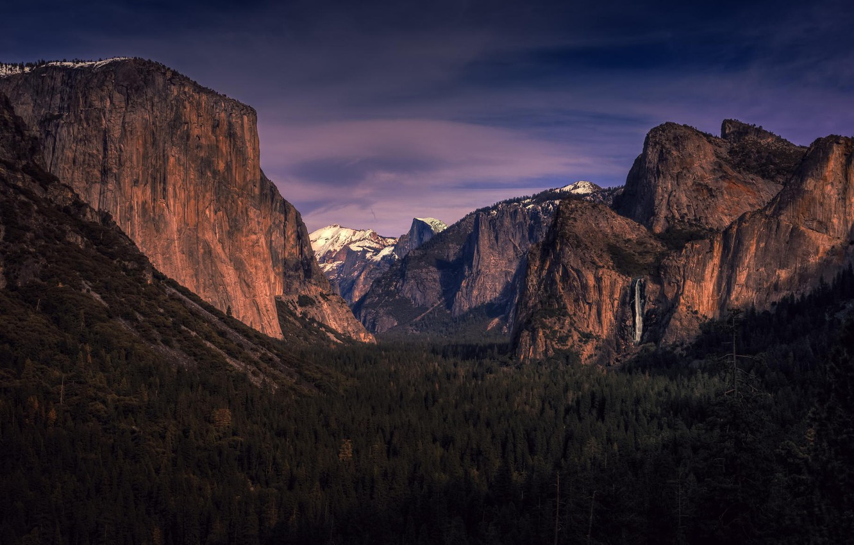 Wallpaper Forest Trees Valley Ca California Yosemite