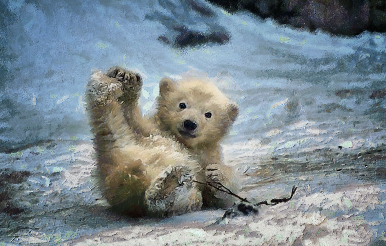 Photo wallpaper winter, background, muzzle, bear