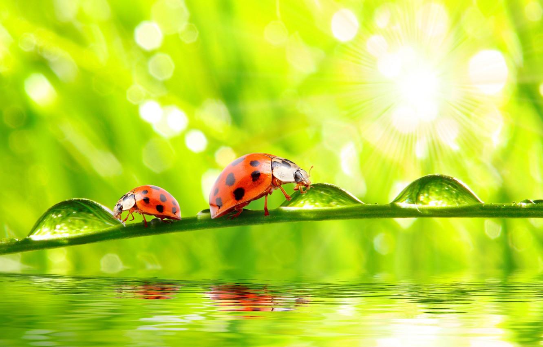 Photo wallpaper grass, nature, water, macro, morning, drops, dew, ladybugs