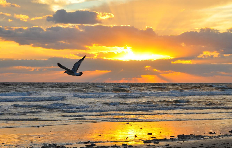 Photo wallpaper sand, sea, wave, beach, the sky, the sun, flight, landscape, sunset, clouds, nature, stones, bird, …