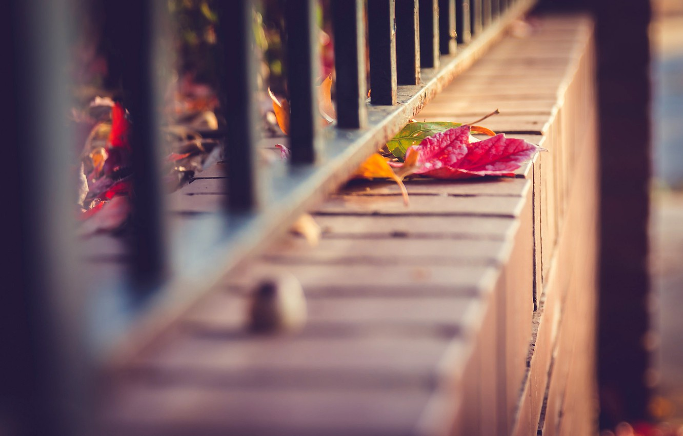 Photo wallpaper autumn, leaves, macro, nature, the fence, fence, rods