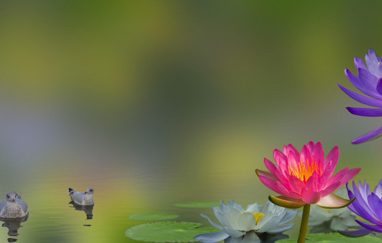 Photo wallpaper flowers, birds, collage, Lily, water Lily