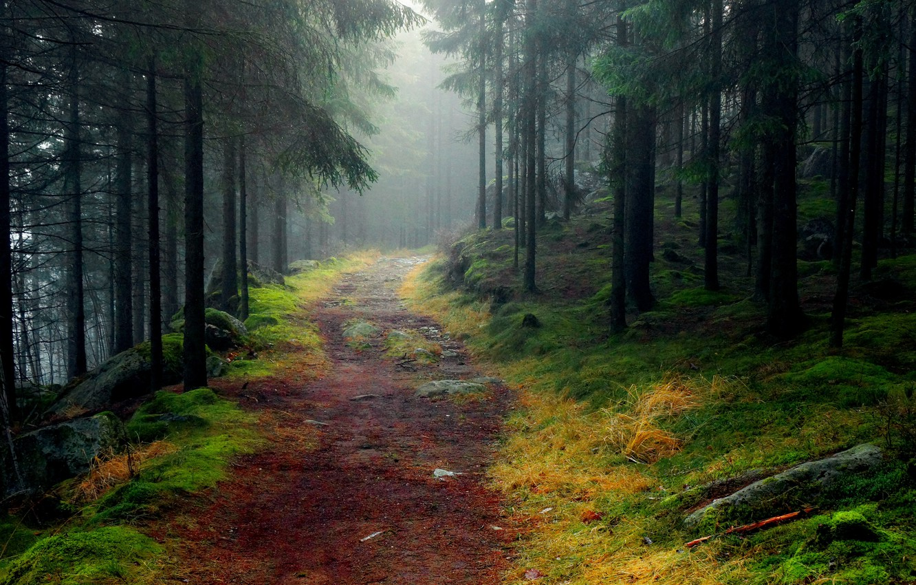 Photo wallpaper road, forest, trees, fog, stones, moss, spruce, Landscapes