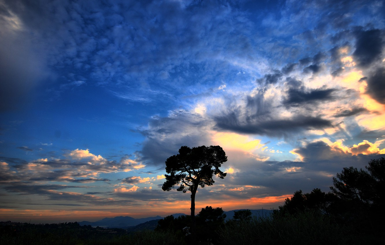 Photo wallpaper the sky, clouds, Tree