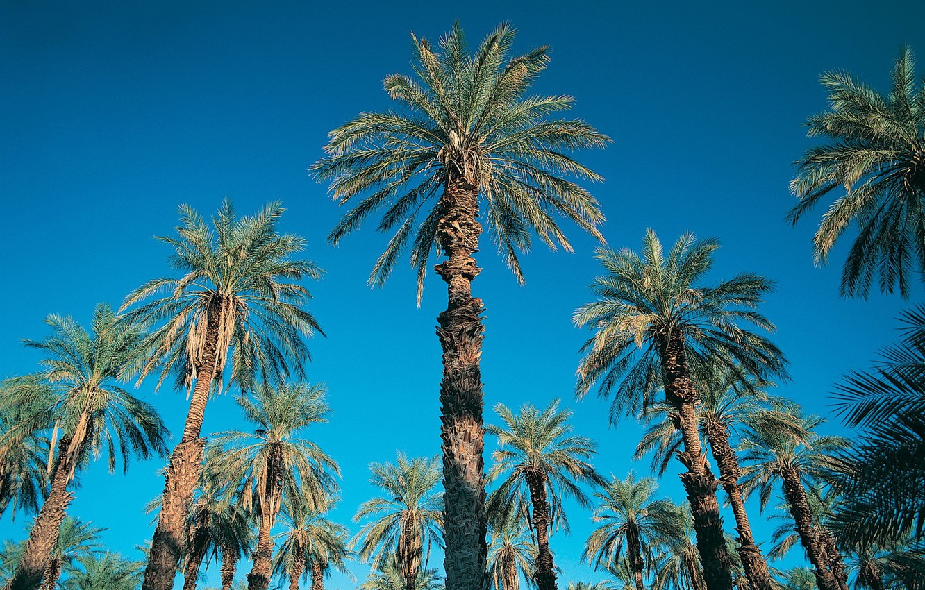 Photo wallpaper the sky, blue, palm trees, 152