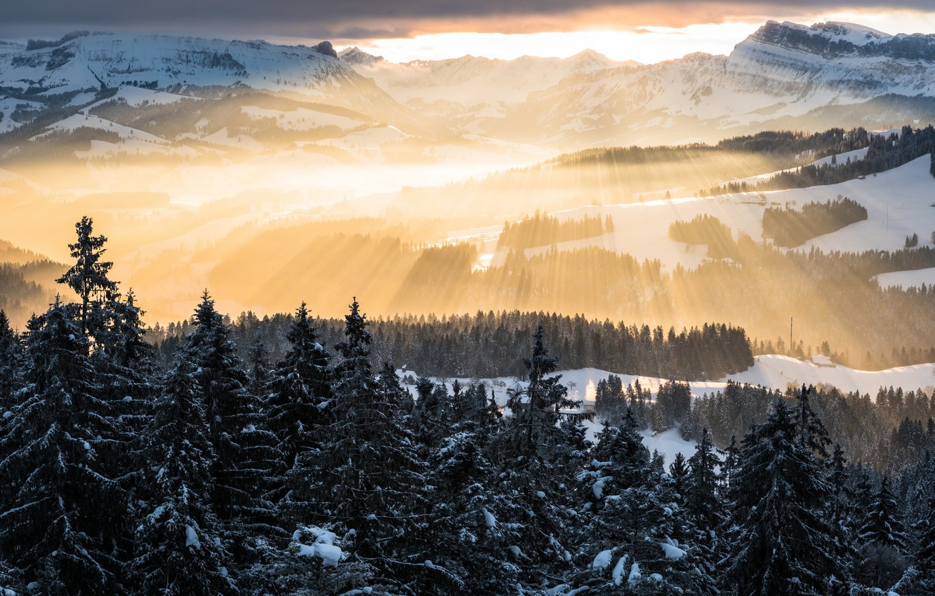 Photo wallpaper forest, the sky, rays, light, mountains, Winter, morning, Alps