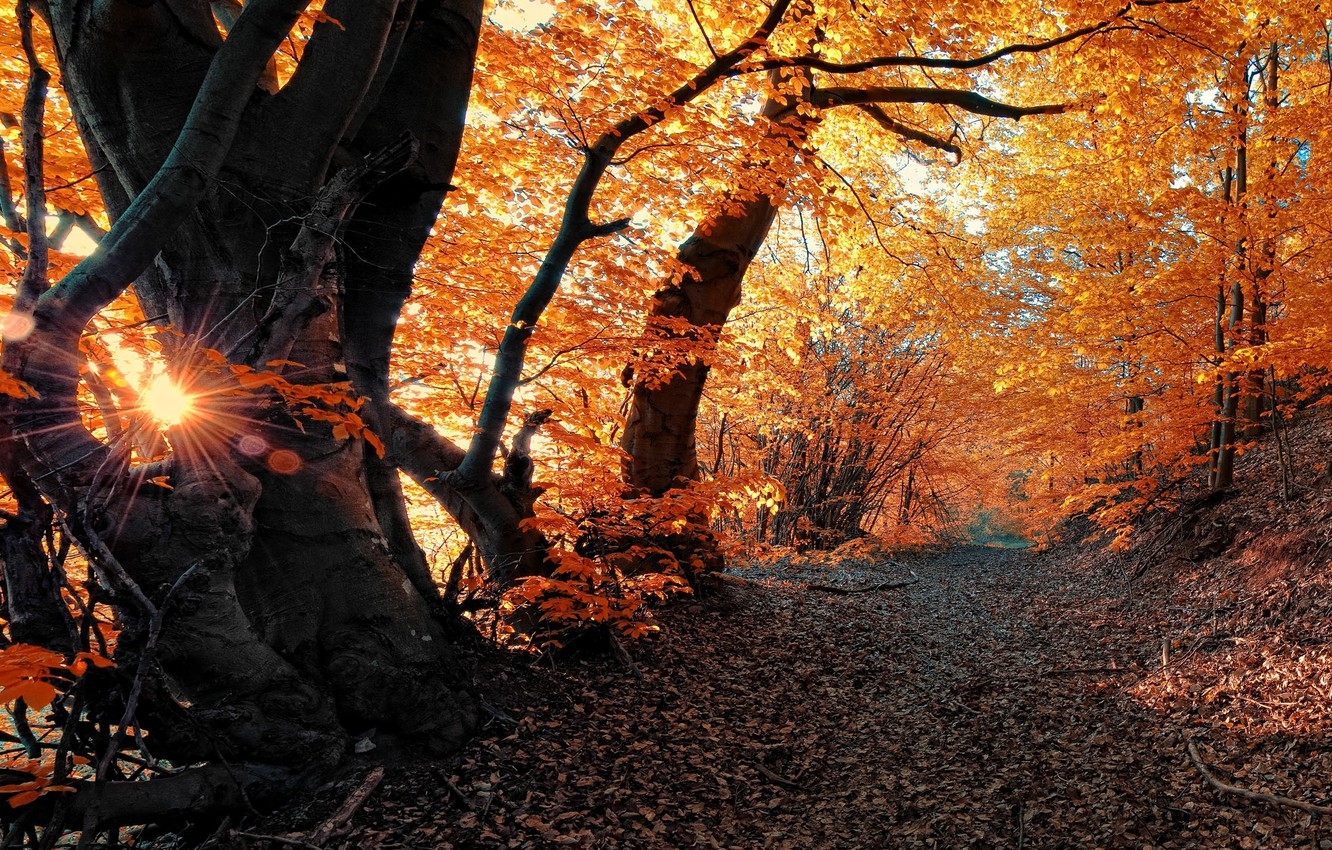 Photo wallpaper autumn, forest, leaves, rays, trees, nature, track, forest, Nature, trees, autumn, leaves, path, fall