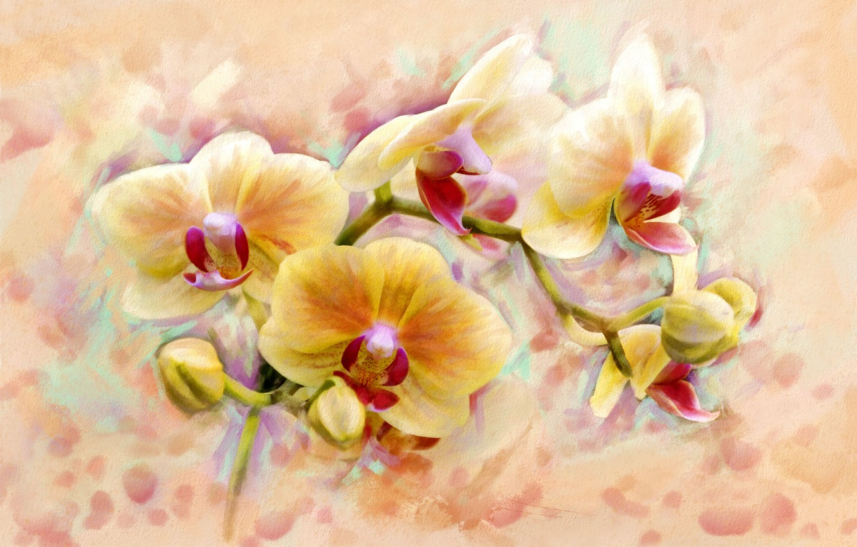 Photo wallpaper flower, art, form, orchids, flower, orchid, flower, beauty., so, originality, fabulous, Shine