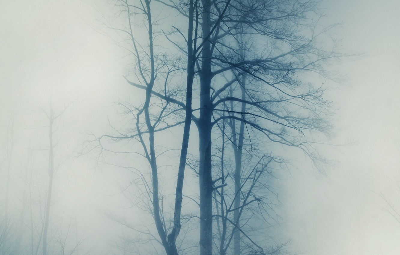 Photo wallpaper trees, nature, fog