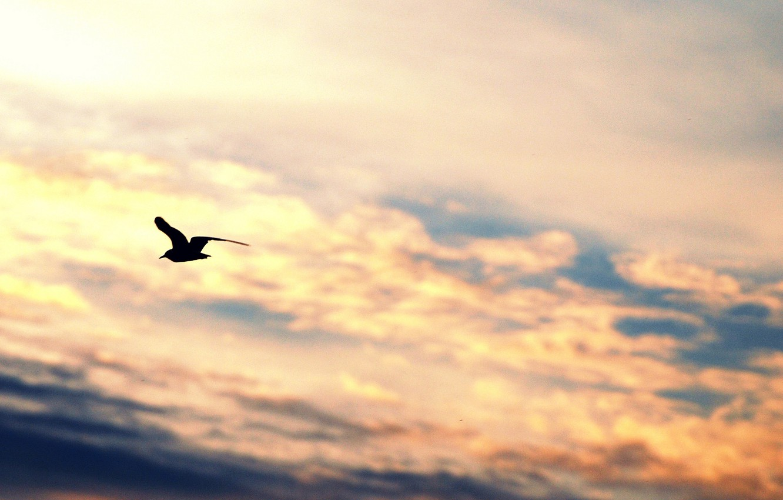 Photo wallpaper the sky, freedom, clouds, flight, background, widescreen, bird, Wallpaper, mood, wings, Seagull, silhouette, wallpaper, sky, …