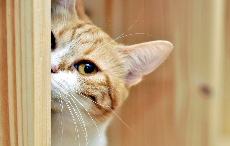 Photo wallpaper cat, look, house