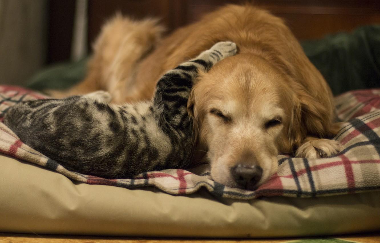 Photo wallpaper cat, background, dog, friendship