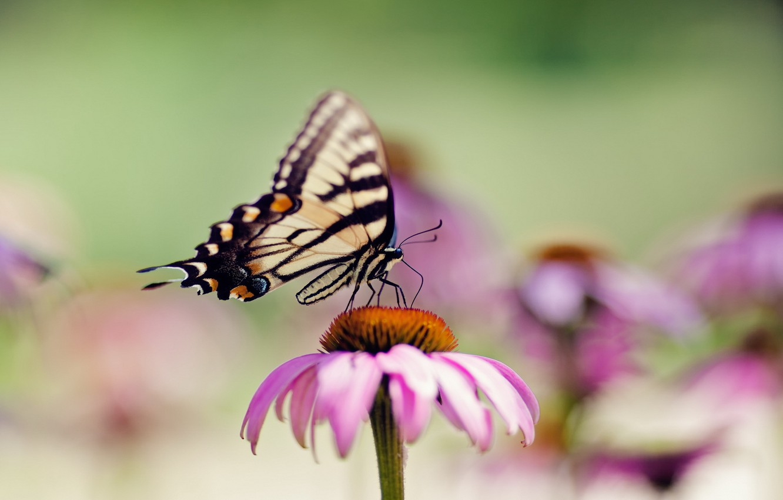 Photo wallpaper flower, summer, macro, butterfly