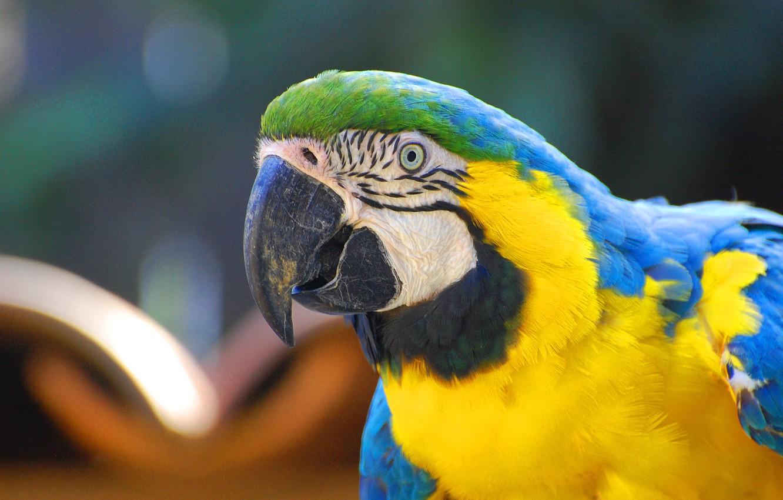 Photo wallpaper Blue, Green, Black, White, Yellow, Beak, Eye, Arara, Macaw, Arara-Canindé