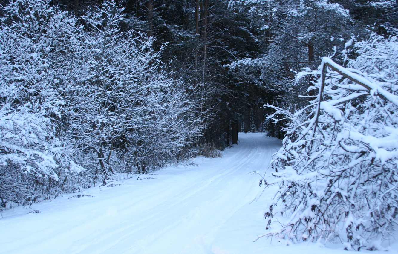 Photo wallpaper cold, winter, road, forest, snow, trees, nature, frost, background.Wallpaper