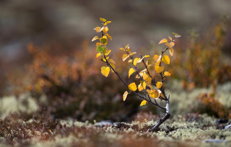 Photo wallpaper autumn, leaves, macro, tree, earth, moss