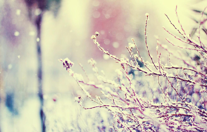Photo wallpaper winter, macro, snow, branches, glare, vanilla