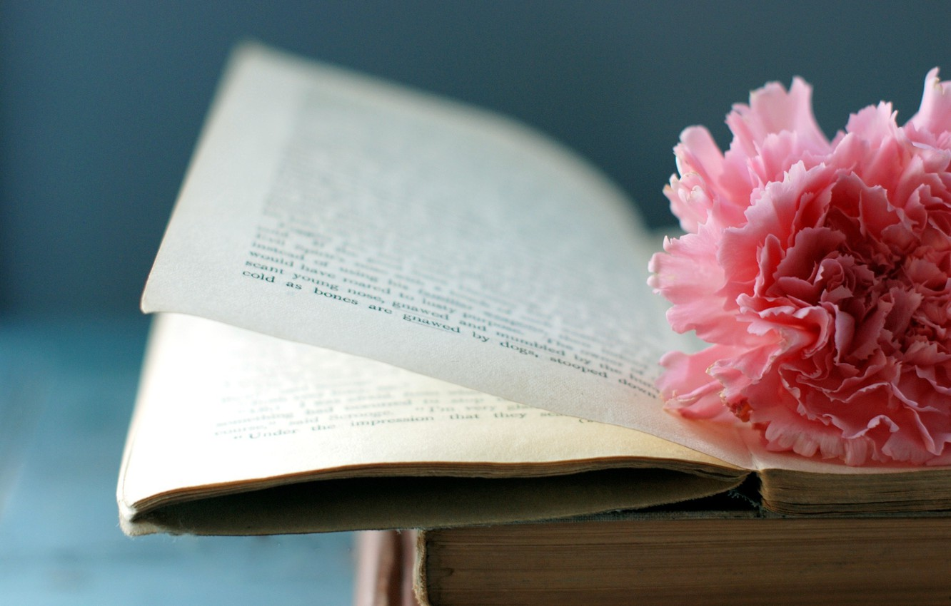 Photo wallpaper flower, macro, book, page