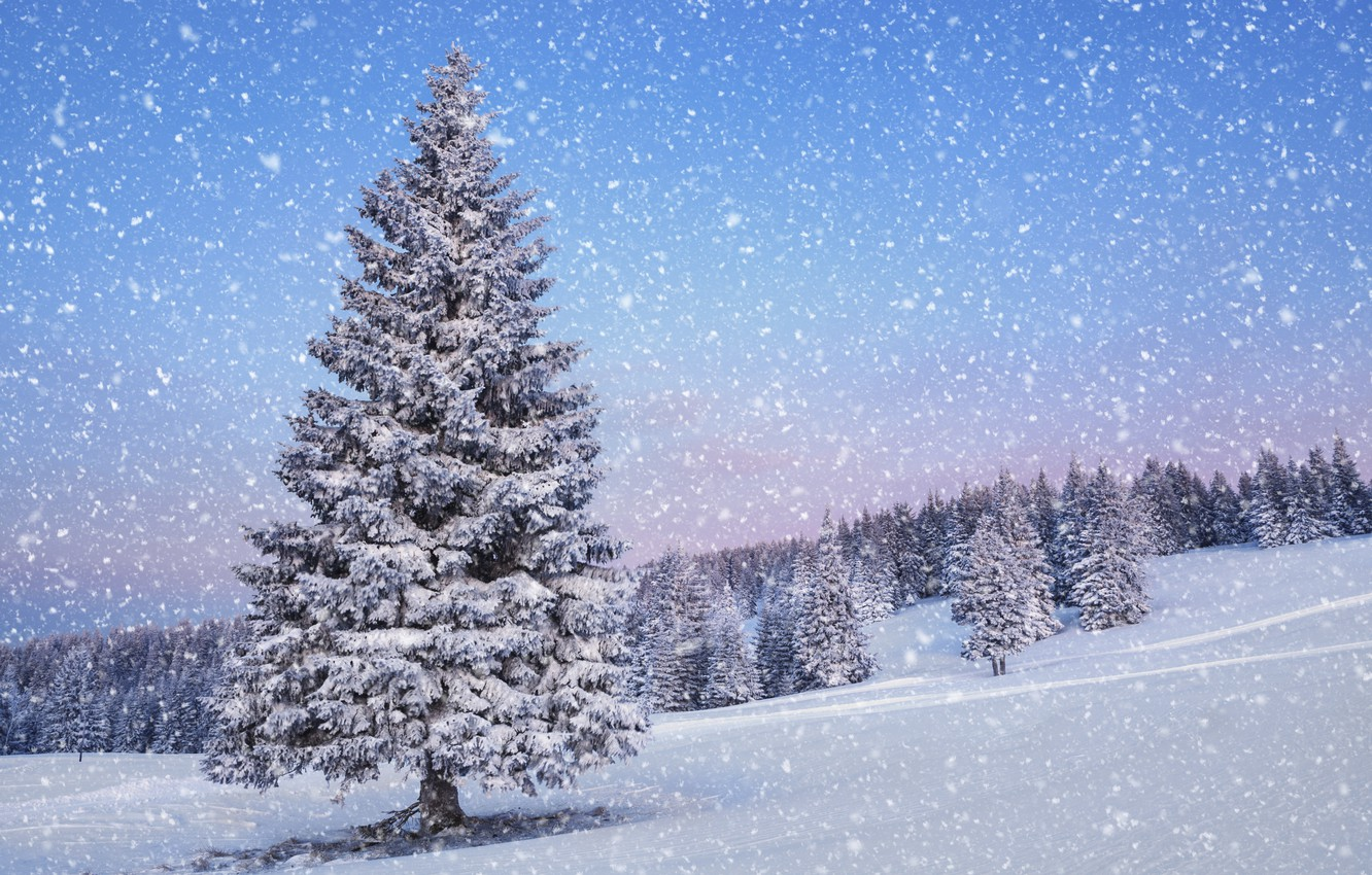 Photo wallpaper winter, snow, landscape, nature, tree, time of the year