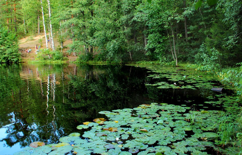 Photo wallpaper nature, lake, photo, Saint Petersburg, Russia, water lilies, Komarovo, Squad