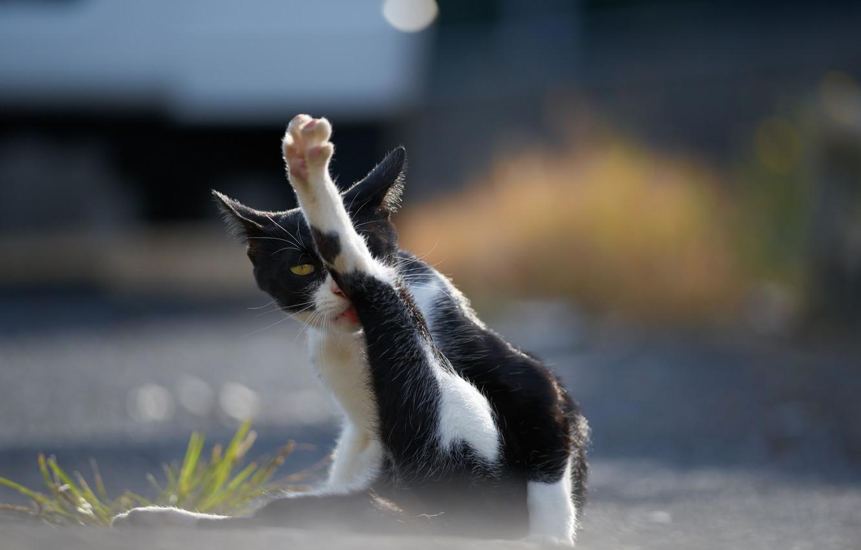 Photo wallpaper cat, Koshak, Tomcat, foot