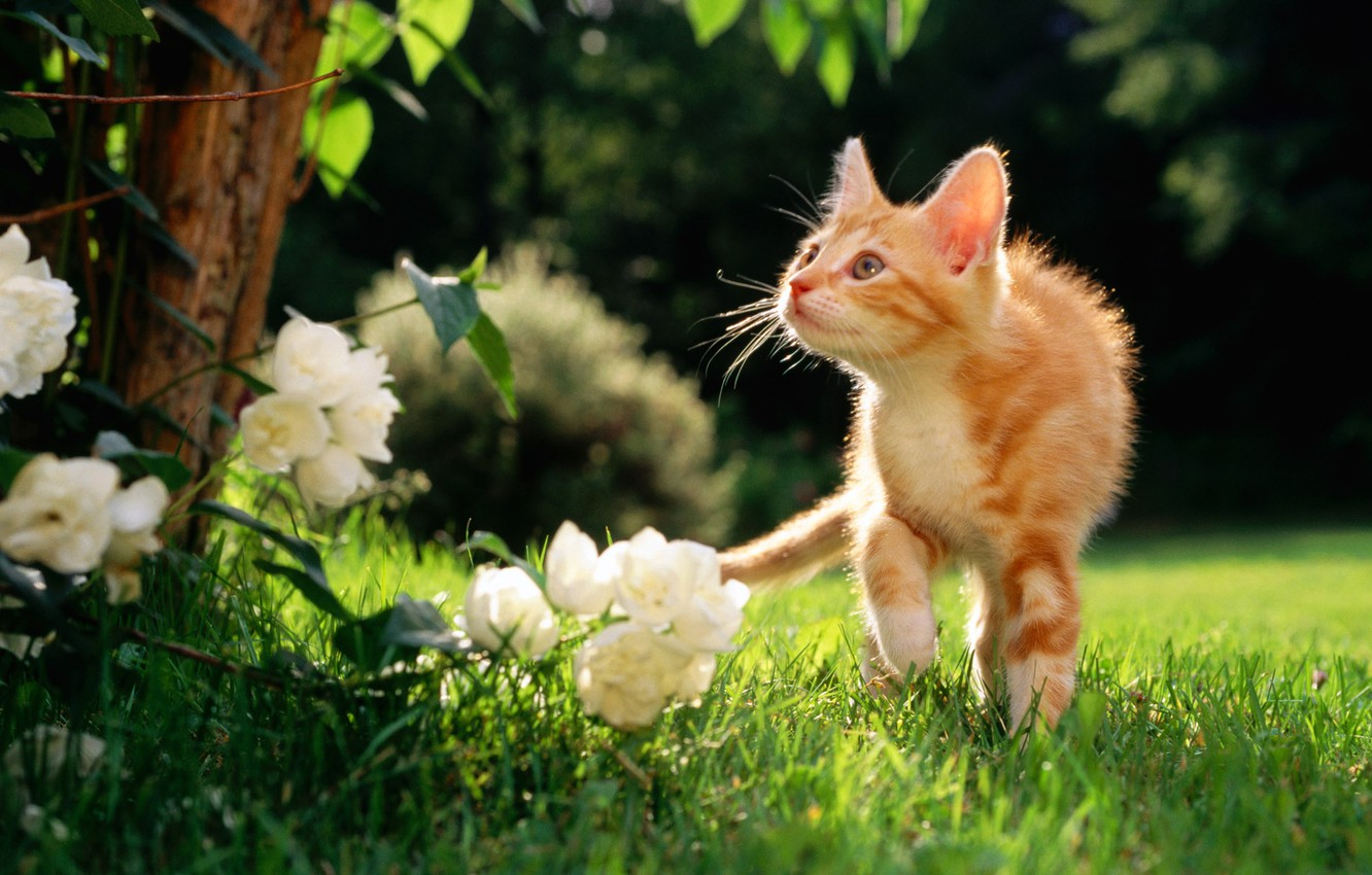 Photo wallpaper flowers, weed, a ginger cat