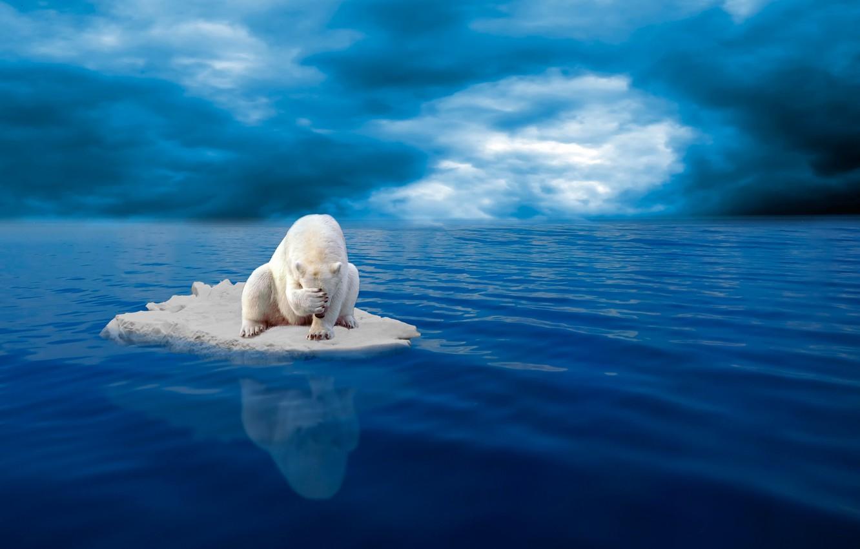 Photo wallpaper despair, floe, polar bear
